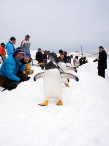 小樽水族館冬季限定的企鵝遊行